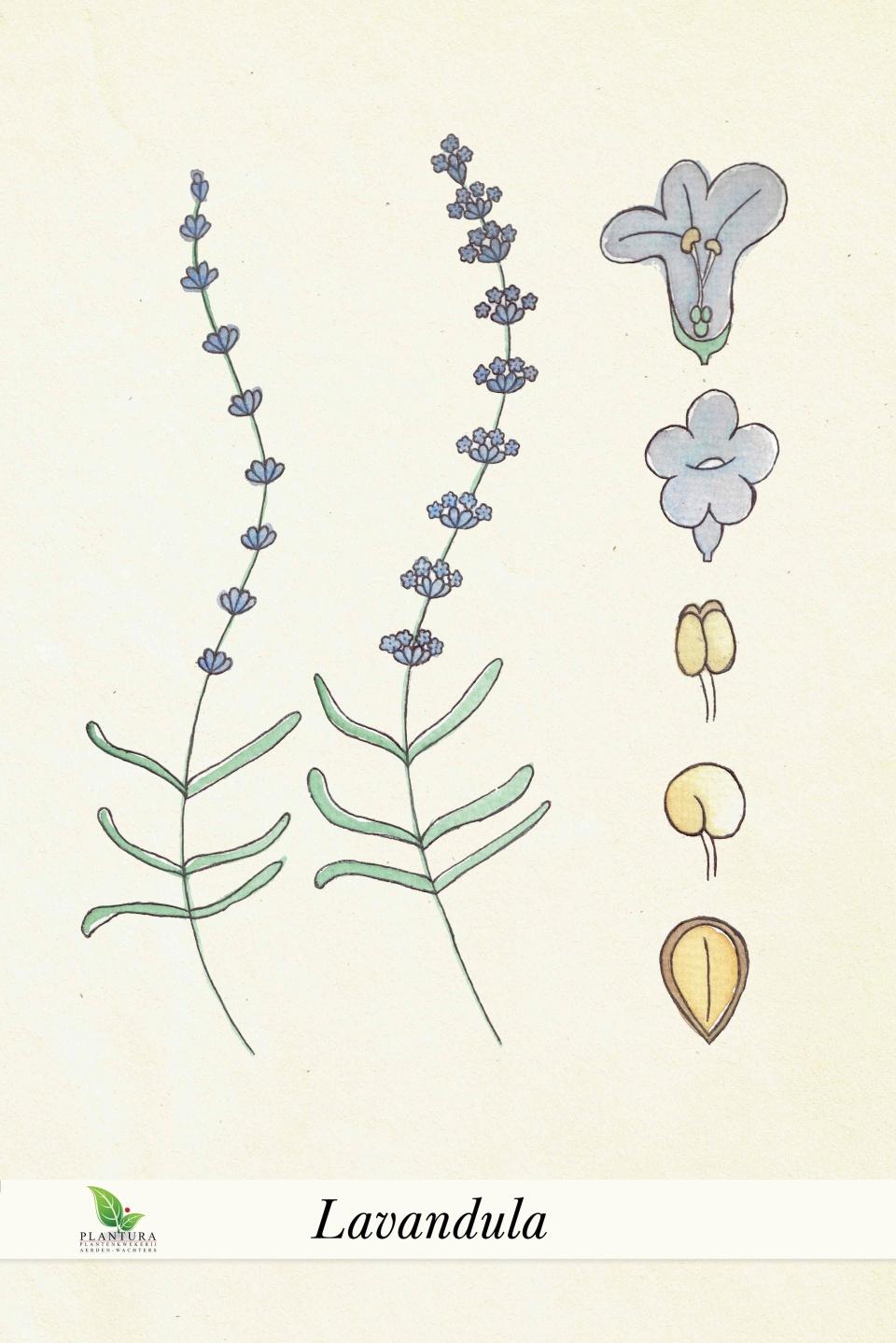 botanische-poster-web