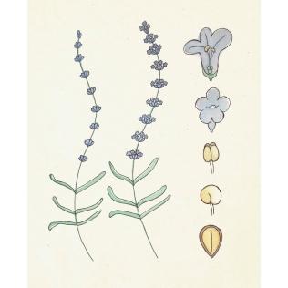 botanische-poster-web_SQUARE2